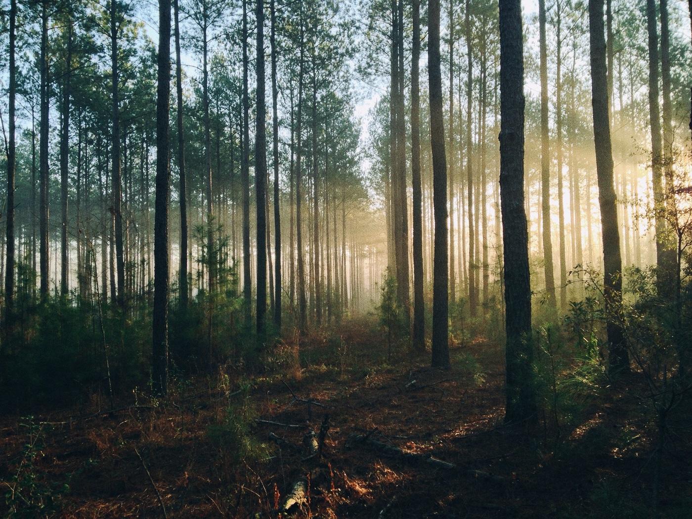 funerailles-ecologiques