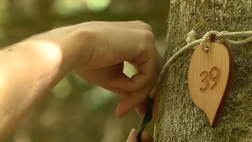 Cime'tree
